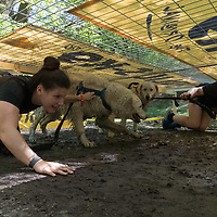 Participants compete in the Hard Dog Race extreme obstacle course race in Torokmezo, Hungary on April 20, 2019. ATTILA VOLGYI