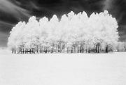 Grove of trees in an open field, Holland Spaarnwoude park