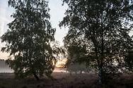 birch trees in the Wahner Heath near Telegraphen hill, morning fog, sunrise, Troisdorf, North Rhine-Westphalia, Germany.<br /> <br /> Birken in der Wahner Heide nahe Telegraphenberg, Morgennebel, Sonnenaufgang, Troisdorf, Nordrhein-Westfalen, Deutschland.