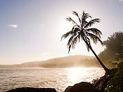 Silhouette of a palm tree on Hanalei Bay, Hanalei, Kaua'i, Hawai'i