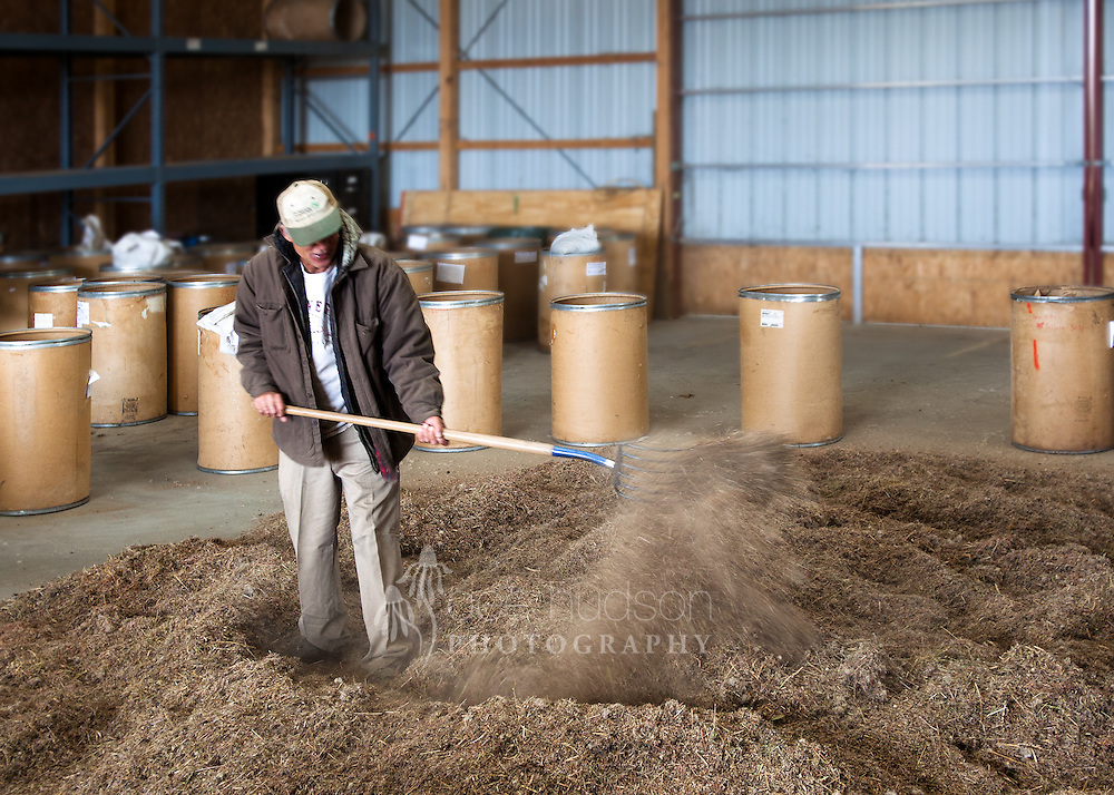 After mixing the seven hundred eighty pounds of seeds for a couple hours, the seeds were shoveled back into the barrels, one scoop at a time, creating further mixing.