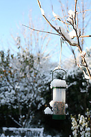 Seed birdfeeder in the snow