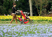 © Licensed to London News Pictures. 22/03/2012. Kew, UK. A woman and children amongst hundreds of  'Glory of the Snow' flowers and Daffodils. People enjoy the spring sunshine in The Royal Botanic Gardens at Kew today, 22 March 2012. Temperatures are set to reach 18 degrees celsius in some parts of the UK today. Photo credit : Stephen SImpson/LNP