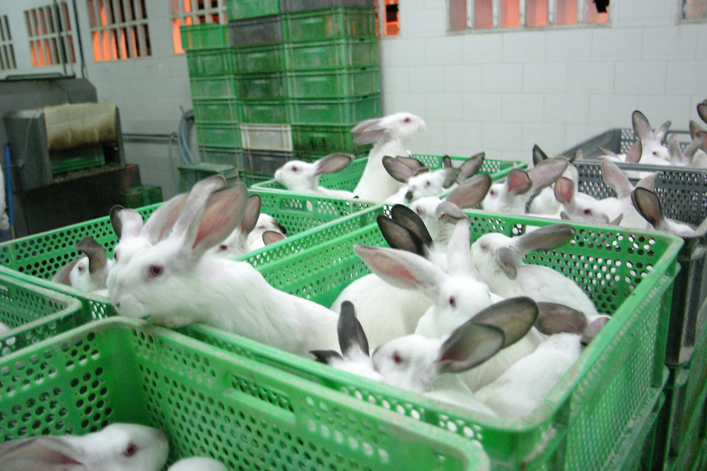 Caged rabbit caged awaiting their fate at a slaughterhouse in Europe. Hundreds of millions of rabbits are factory farmed and slaughtered for fur and meat every year.