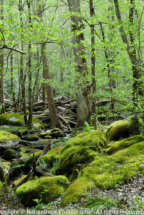 Spring is taking hold in Great Smoky Mountains National Park