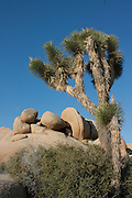 Jumbo Rocks at Joshua Tree National Park