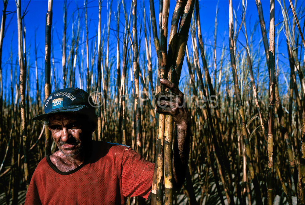 Sugar cane worker, Rio de Janeiro state, Brazil