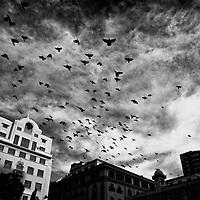Invasion in Green Market Cape Town