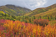 Autumn and the Ogilvie Mountains, part of the Yukon Ranges. Dempster Highway.