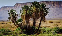 An Oasis in the Moroccan desert near Foum Zguid.<br /> <br /> (c) Andrew Wilson | Edinburgh Elite media