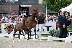 Veiling<br /> World Championship Young Dressage Horses <br /> Ermelo 2016<br /> © Hippo Foto - Leanjo de Koster<br /> 29/07/16