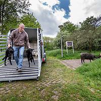 Nederland, Amsterdam, 9 mei 2017.<br /> Jasper Groot van Gradient Natuurbeheer zet 10 schapen uit bij de Westertocht. Dat is een klein parkje aan het einde van de Kometensingel (tegenover 339) in Tuindorp Oostzaan. Tussen 11 en 11.30 uur komen daar tien schapen aan die het gras in de komende jaren kort moeten zien te houden.<br /> <br /> Foto: Jean-Pierre Jans