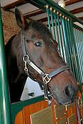 "© Filippo Alfero<br /> Vigone (TO), 17/11/2008<br /> sport varie<br /> Lo stallone Varenne presso l'allevamento ""Il Grifone"" di Vigone<br /> Nella foto: Varenne<br /> <br /> © Filippo Alfero<br /> Vigone, Turin, Italy, 17/11/2008<br /> sport<br /> The stallion Varenne at the farm ""Il Grifone""<br /> In the photo: Varenne"