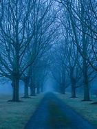Driveway, Trees, East Marion, Long Island, New York