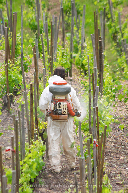 manually spraying the vineyard cornas rhone france