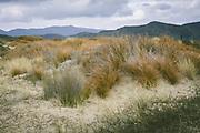 Grassy dunes on Doughboy Bay, The Southern Circuit, Stewart Island / Rakiura, New Zealand Ⓒ Davis Ulands | davisulands.com