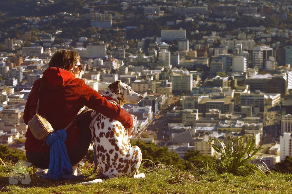 A woman and her dalmatian observe the city from Mt Victoria, Wellington, New Zealand.