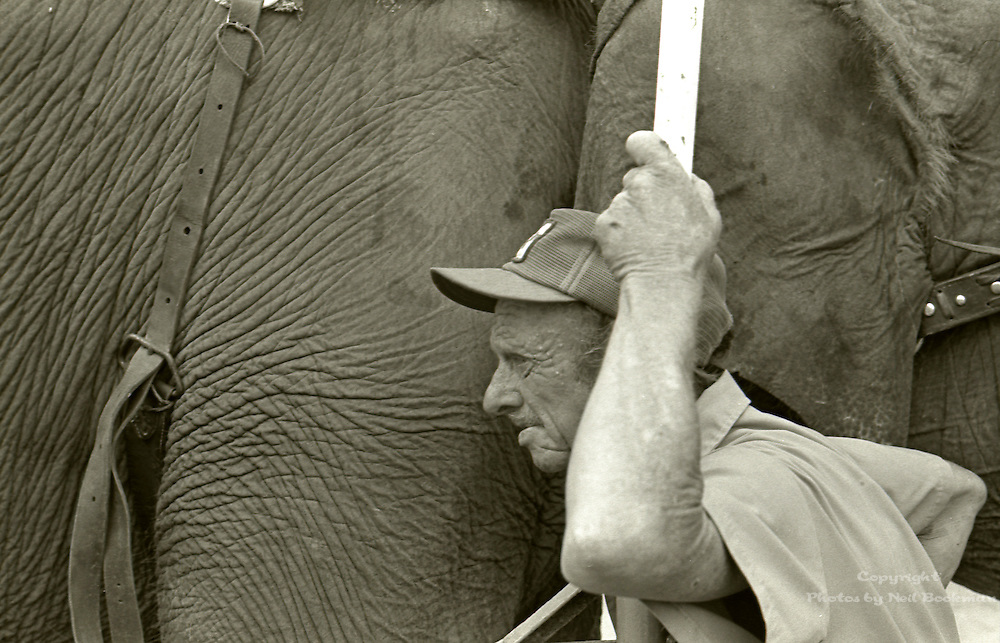 This is a photo taken around 1977 at the University of Miami. The elephant and trainer were part of a small traveling circus. It caught my attention that the trainers skin resembled the elephants hide.