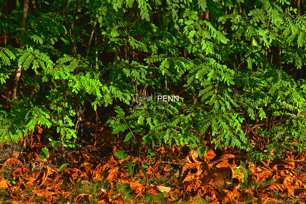 Low branches and fallen leaves at the edge of a forest in the Bahamas.