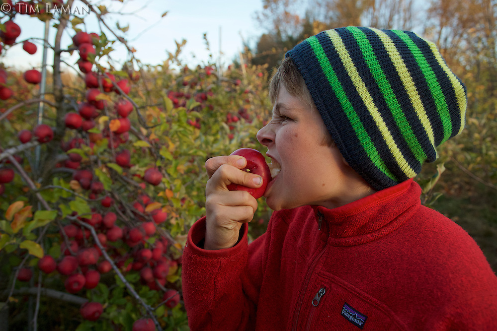 Russell Laman eating a fresh apple in an apple orchard.