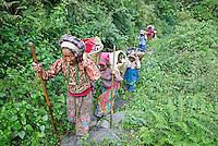 Nepal. Vallee de l Arun. Region Est du Nepal. Porteur, les routiers de l Himalaya. // Nepal. Arun valley, East Nepal. Porter, the road rider of the Himalaya.