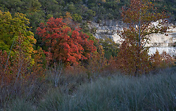 Stock photo of trees changing to fall colors in the Texas Hill Country