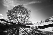 Sunlight & shadows in Upper Lathkill Dale. White Peak, Derbyshire. Peak District National Park, England, UK. Captured in infrared & converted to black and white.