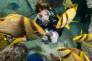A diver feeds fish in the Altanic Coral Reef exhibit at the National Aquarium.