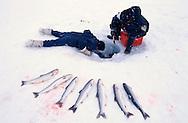 The Mucktar family boys Ice fishing for Arctic Char, Salvelinus alpinus, Baffin Island, Nunavut, Canada