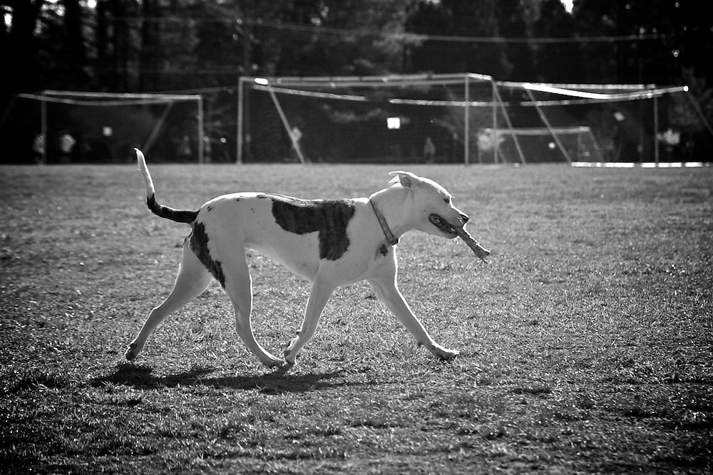 Dogs play outside
