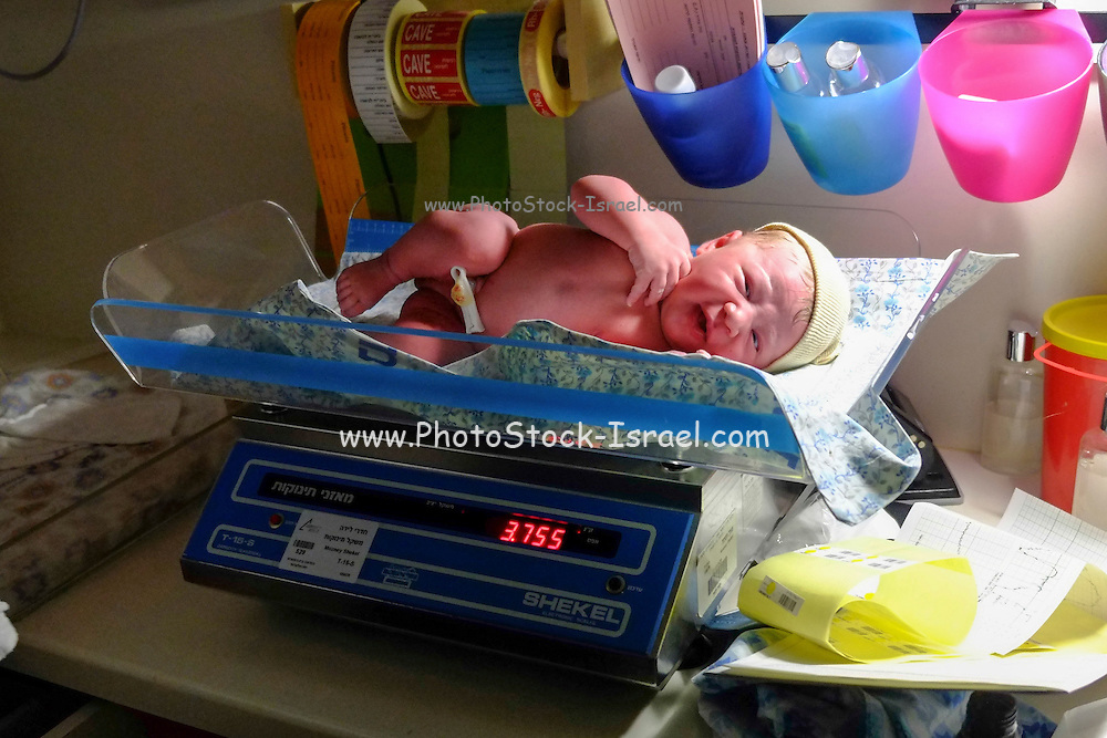 Weighing a Newborn infant baby in a maternity ward. Model Release available