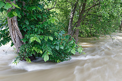 Floodwaters from Trinity River rushing past trees toward Little Lemon Lake, Great Trinity Forest, Dallas, Texas, USA