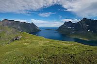 Female hiker walks along hillside above Reinefjord, Moskenesøy, Lofoten Islands, Norway