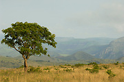 View across Ithala Game Reserve, South Africa
