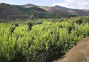 Fruit trees fertile valley farm land Rio Benamago valley, Malaga province, Spain