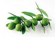 Olive leaves and green olives photos