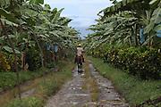 A member of COOBANA rides a horse through banana plantation number 51. COOBANA: Finca 51, Changuinola, Bocas del Toro, Panamá. September 3, 2012.