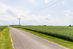Schroeder Farm at Shirley Blacktop and 1375E in McLean County is planted for 2021 with a healthy crop of soybeans.