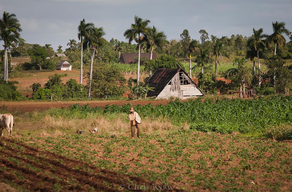 Farmer near Las Palmas, Pinar del Rio, Cuba