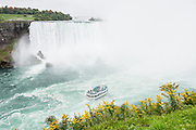 The Maid of the Mist cruises up to Horseshoe Falls (or Canadian Falls) on the Niagara River. The town of Niagara Falls in Ontario, Canada, gives excellent views of all three sections of Niagara Falls, which drops 167 feet (51 m). Niagara Falls has the highest flow rate of any waterfall in the world. Niagara Falls is the name for the combined flow of Horseshoe Falls, American Falls and Bridal Veil Falls, on the Niagara River along the international border between Ontario, Canada and New York, USA. The Niagara River drains Lake Erie into Lake Ontario. Horseshoe Falls is the most powerful waterfall in North America, as measured by vertical height combined with flow rate. The falls are 17 miles north-northwest of Buffalo, New York and 75 miles south-southeast of Toronto.
