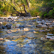 Clear water and shady cover dresses Lamoille Creek, near where it exits one of the most beautiful canyons in north America. Bright greens and the beginning of fall's favorite color - yellow - covers the cottonwoods bending over the bend in the creek.