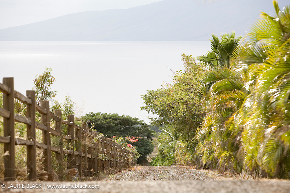 Drive lined with rustic fence and palms