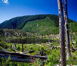 Ryan Lake, Mt. St. Helens National Volcanic Monument, Washington, US