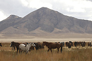 SHOT 10/4/18 3:41:39 PM - Tooele County is a county in the U.S. state of Utah. As of the 2010 census, the population was 58,218.  The county was created in 1850 and organized the following year. Tooele County is part of the Salt Lake City, UT Metropolitan Statistical Area. The western half is mostly covered by the Great Salt Lake Desert. The eastern half across the mountains contains small towns outside Salt Lake City as well as the Dugway Proving Ground. (Photo by Marc Piscotty / © 2017)