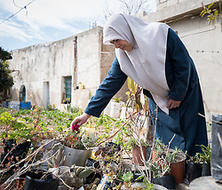16 February 2020, Irbid, Jordan: Fatima Al-Omari works in her garden in Al-Mazar. She is one of many beneficiaries to recently have received support from the LWF in setting up home-based farming in the area of Al-Mazar. By providing tools and seeds, the project has helped 150 families grow food for themselves and, in some cases, also earn an income from selling their surplus at local markets.