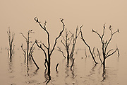 Sunset on Lake Kariba, Zimbabwe Dead tree stumps in the foreground