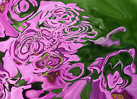 abstract violet and pink shades in fluid abstract shape.