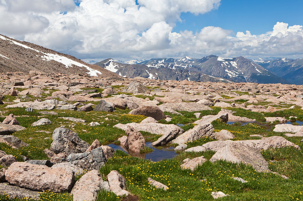 An alpine meadow at the foot of the Boulder Field on Longs Peak, Rocky Mountain National Park, Colorado.
