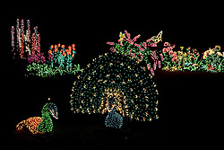 North America, United States, Washington, Bellevue, Garden d'Lights holiday display at Bellevue Botanical Garden