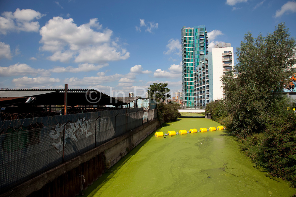 Duck weed formed on the surface of Hertford Union Canal in East London. This is part of the 2012 Olympics site and is cordoned off.